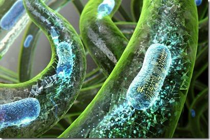 Bacteries2