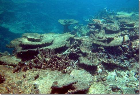 coraux-3d